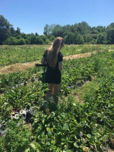 garden of Strawberries